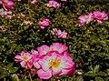 Butchart Gardens - Victoria, British Columbia, Canada (28642454064).jpg