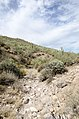 Butcher Jones Trail to Pinter's Point Loop, Tonto National Park, Saguaro Lake, Ft. McDowell, AZ - panoramio (143).jpg