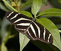 Butterfly 3 (4867213866).jpg