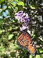Butterfly Estates.jpg