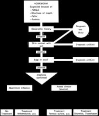 File:CDC Hookworm Treatment Protocol(5245) png - Wikipedia