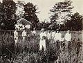 COLLECTIE TROPENMUSEUM De paddi oogst van de Middelbare Landbouw School in Bogor TMnr 60050133.jpg