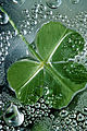 CSIRO ScienceImage 384 A Clover Leaf.jpg
