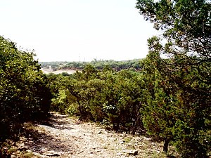Cleburne State Park - View from a hiking trail above Cedar Lake.
