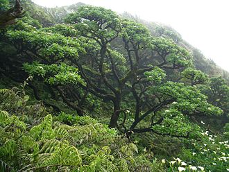 Flora of St Helena - Remnant of a native Cabbage Tree forest in Saint Helena.