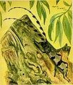 Caccia grossa fra le erbe (1942) (20485790866).jpg