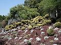 Cactus & Succulents (183442603).jpg