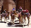 Camels at Petra.jpg