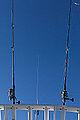 Canes à pêche dans le ciel (11365012633).jpg