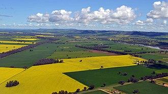 Cowra - Image: Canola Fields (Cowra)