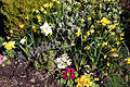 Capel Manor Gardens Enfield London England - Spring border planting.jpg