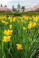 Capitol Mall springtime (33228041590).jpg