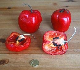 340d15974b55 Capsicum pubescens - Wikipedia