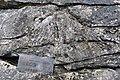 Carboniferous Coral - geograph.org.uk - 2140306.jpg
