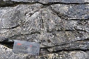 Carboniferous Limestone - Carboniferous coral, Ingleton.