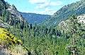 Carson Pass, Eldorado National Forest 8-10 (14786365087).jpg