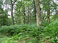 Carstramon Wood - a SWT Reserve - geograph.org.uk - 1429061.jpg