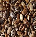 Cassava seed (14913272466).jpg