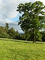 Castle Park - geograph.org.uk - 186754.jpg