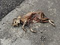 Cat's Corpse.jpg