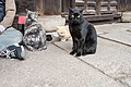 Cat's passage, Onomichi City; November 2018 (05).jpg