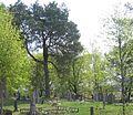 Cemetery kirklionys.jpg