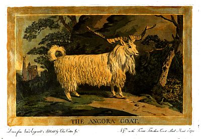 Charles Catton, Animals (1788) Page34 Image1.jpg