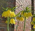 Chartwell flower (6250620453).jpg