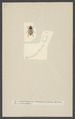 Chasmatopterus - Print - Iconographia Zoologica - Special Collections University of Amsterdam - UBAINV0274 001 05 0033.tif