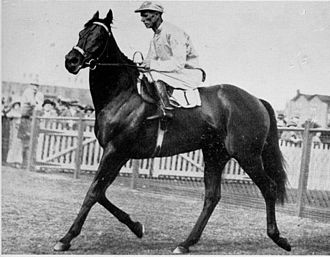 Chatham (horse) - Chatham returning to scale at Randwick with jockey Jim Pike