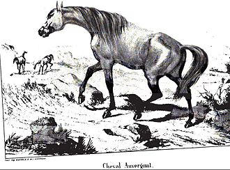 Auvergne horse - An engraving of an Auvergne horse in 1848