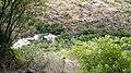 Chinnar Wildlife Sanctuary, River - panoramio.jpg