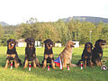 Class winners Special Hovawart dog show Varin 2005.jpg