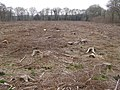 Cleared area in Pondhead Inclosure, New Forest - geograph.org.uk - 398043.jpg