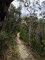 Cliff Top Track - panoramio (4).jpg