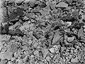 Collectie Nationaal Museum van Wereldculturen TM-10021334 Saba. Kleine Opuntiavegetatie (Opuntia tria cantha). Fortbay Saba -Nederlandse Antillen fotograaf niet bekend.jpg