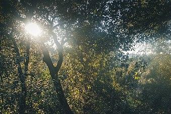 Collserola sun.jpg