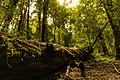 Colores del bosque.jpg