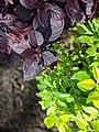 Colors in Leaves.jpg