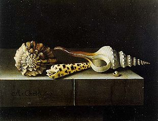 Still life with four shells