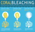 Coral bleaching.png