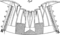 Corset1905 166Fig139.png