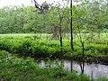 Countryside near Holocaust Massacre Site - Zhytomyr - Polissya Region - Ukraine (26531893653).jpg