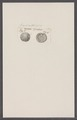 Crania spec. - - Print - Iconographia Zoologica - Special Collections University of Amsterdam - UBAINV0274 093 02 0007.tif