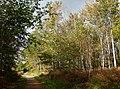 Creech Woods - geograph.org.uk - 1021917.jpg