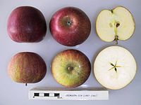 Cross section of Crimson Cox, National Fruit Collection (acc. 1957-238).jpg