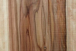 Cryptomeria - Plank cut from Cryptomeria japonica
