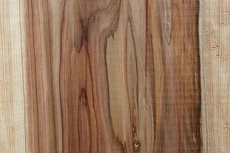 Cryptomeria - Plank cut from Cryptomeria japonica
