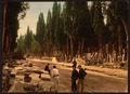 Cypresses and road leading to the cemetery, Scutari, Constantinople, Turkey-LCCN2001699428.tif