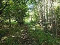 Czech Republic-Poland border, Opawskie Mountains 2020.09.08 09.jpg